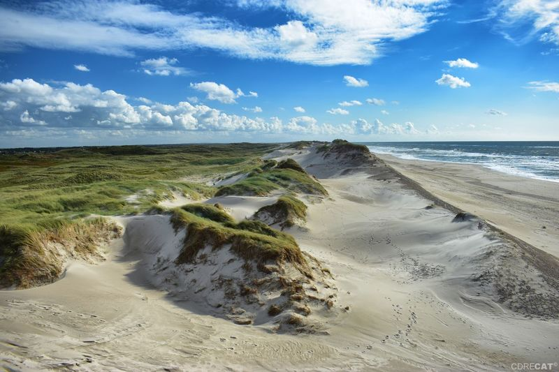 Denmark Denmark 🇩🇰 Landscape Landscape_Collection EyeEm Nature Lover EyeEm Masterclass Dunescape Northsea Dunes Sand Dune Water Sea Beach Marram Grass Sand Blue Wave Summer Low Tide Seascape Coast Seashore