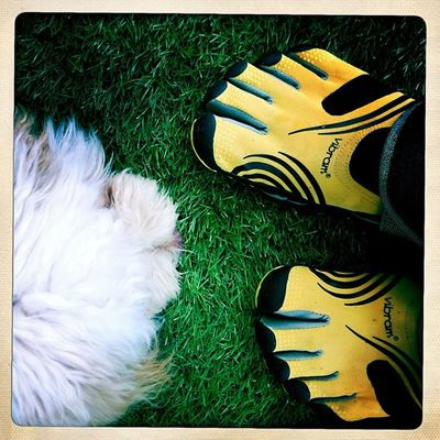 Vibram Fivefingers Shoes Dog igerslebanon photooftheday ignation instadaily september cool instagood