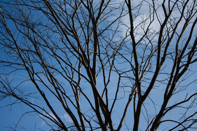 Bare Tree Beauty In Nature Blue Branch Day Dried Plant Full Frame Growth High Section Low Angle View Nature Non-urban Scene Outdoors Remote Scenics Sky Tranquil Scene Tranquility Treetop