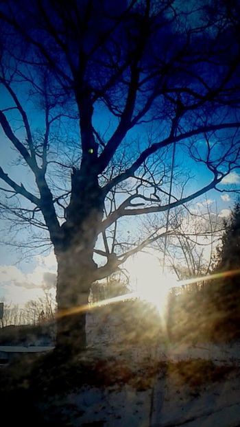 Tree Bare Tree Landscape Autumn Sun Sunlight WoodLand Pinaceae Fog Branch Forest Beauty In Nature Nature Tree Trunk Silhouette No People Sky Shadow Outdoors Winter DreamScapes Tranquility Surrealism Rich Colors Saturated Colors The Week On EyeEm EyeEmNewHere Lost In The Landscape