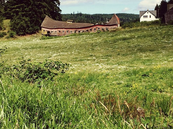 Barns Ruins Architecture Old Barn Old Buildings Decrepit Deterioration Picturesque Oldie But Goodie Beauty In Nature Scenics Chimacum Showcase July