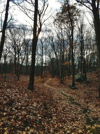 Autumn Hike In