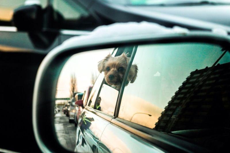 Winter driving Animals Japan Winter Driving Love Dog
