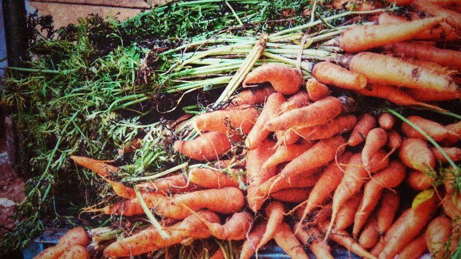 Naranja sabor zanahoria #carrot #cuba #orange Color #zanahoria Fishing Net Seafood High Angle View Fishing Industry Close-up Grass