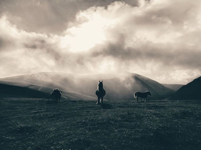 Horses Grazing On Mountains Against Cloudy Sky