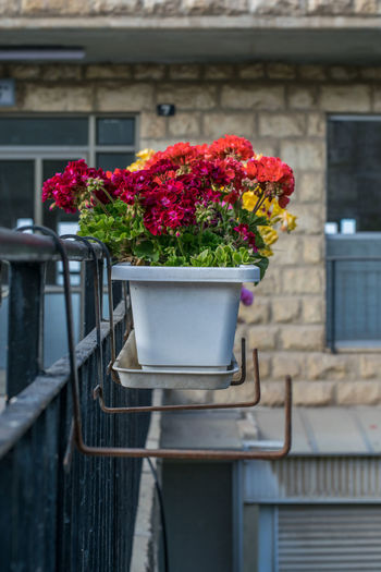 Flower pots on railing against building