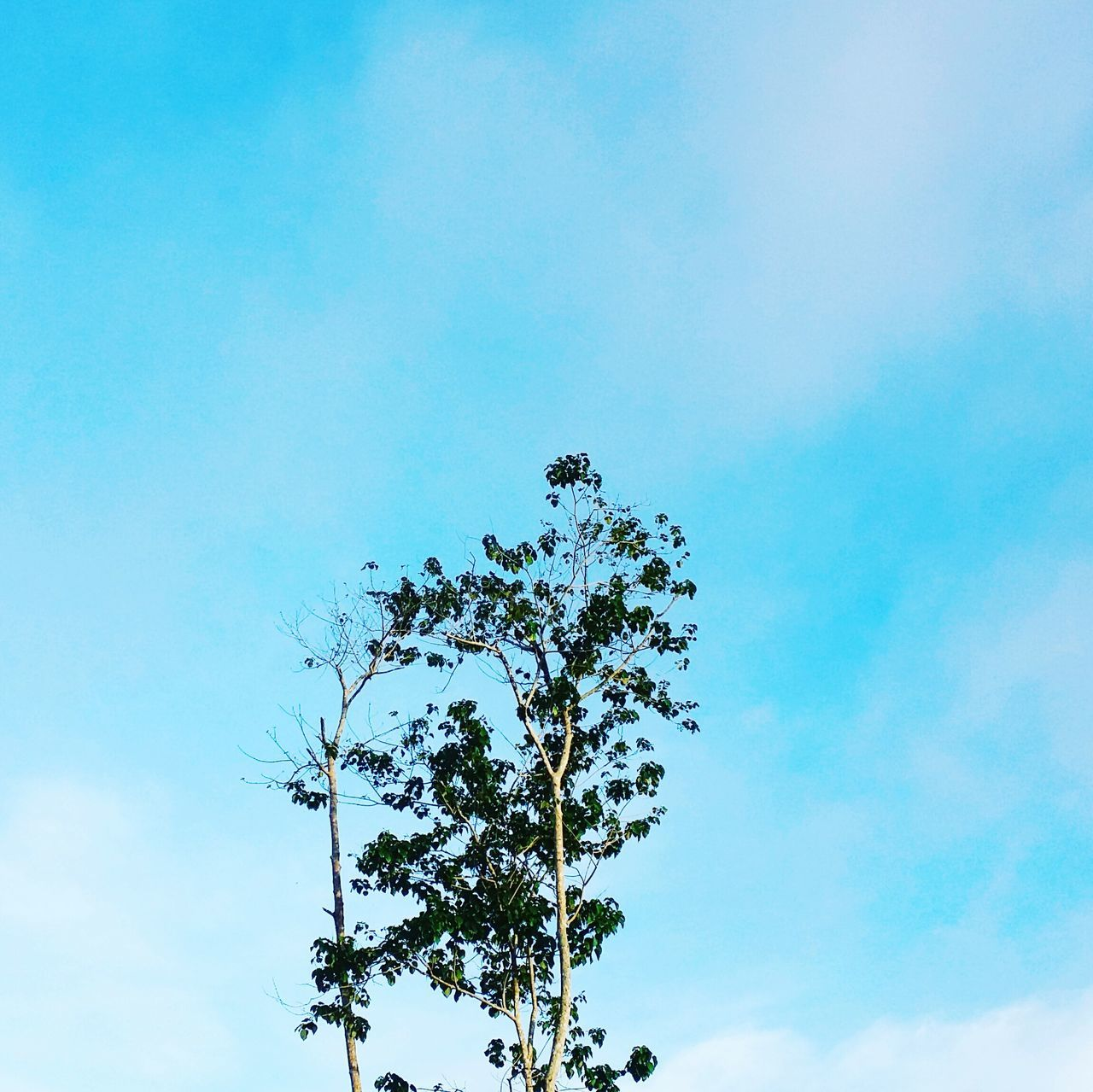 low angle view, nature, tree, sky, beauty in nature, growth, day, no people, outdoors, tranquility, branch, blue, fragility, flower