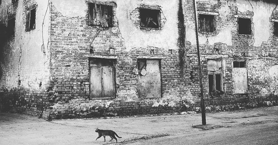 Lonely Cat Abandoned Animal Animal Themes Architecture Building Building Exterior Built Structure Cat Day Deterioration Domestic Domestic Animals House Mammal No People Old One Animal Outdoors Pets Residential District Vertebrate Weathered Window