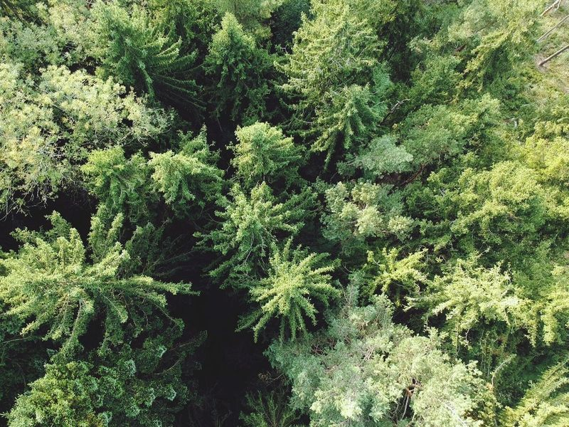 Over the trees with my drone🌲 Nature Switzerland Drone Moments Drone Dji Droneshot Dronephotography Backgrounds Tree Green Color Nature Outdoors Beauty In Nature Lost In The Landscape Perspectives On Nature