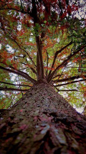 Fall Beauty EyEm On Autumn Fall Colors
