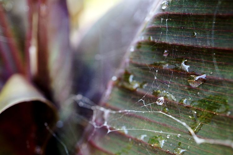 Drops Macro EyeEm Nature Lover Waterdrops EyeEm Best Shots Morning EyeEm Selects Water Spider Web Insect Close-up Web Weaving Textile Factory Leaf Vein Droplet Dew Water Drop Natural Pattern Plant Life Leaves