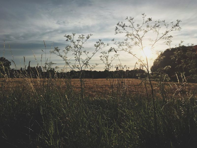 Sunset Sky Nature Germanroamers Moody Franconia Nuremberg Outdoors Plant Field Grass Landscape Beauty In Nature Bavaria Nature Photography Day Tree