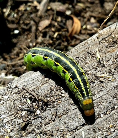 He Sat Still Smallthingsthatmakemehappy Caterpillar Caterpillar!❤👌😹 In the garden, and I let it go! Green Caterpillar