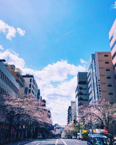 市ヶ谷あたり Tokyo,Japan Sakura Streetphotography No Standard World Sky Low Angle View Stories From The City Go Higher The Street Photographer - 2018 EyeEm Awards