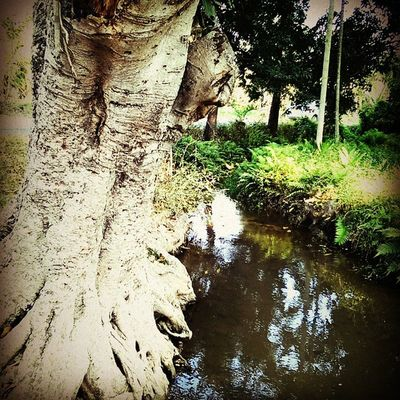 Mysorediaries Mysurumemes Srirangapatna Tree Water Nature Colourful Beautiful Fashion_ages @amazingearthgalleryInstamysore Nammamysore