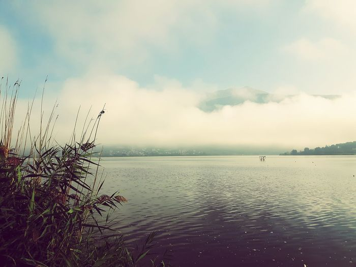 tranquil scene over lake Plants Mountain Foggy Bird Water Flying Silhouette Sky Horizon Over Water Shore Calm Tranquil Scene Idyllic Coast Scenics Tranquility Remote Countryside Lakeside Non-urban Scene Atmospheric Mood
