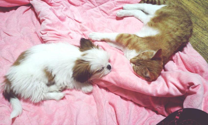 귀여운 내새끼들 Catanddog 옹심이 시루 Pets