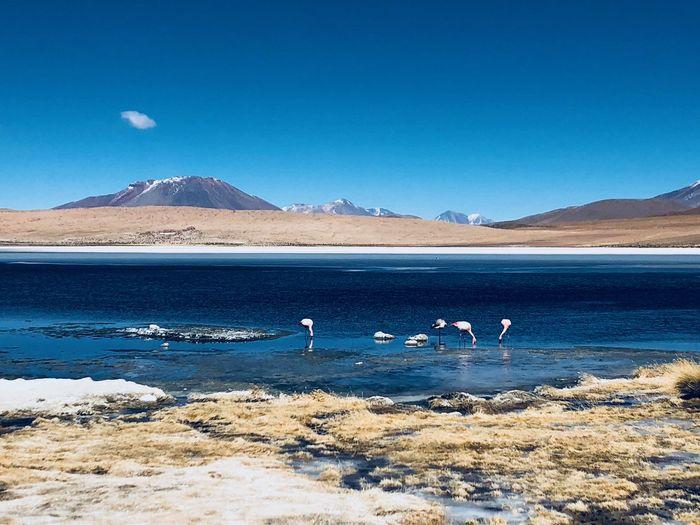 Bolivia Scenics