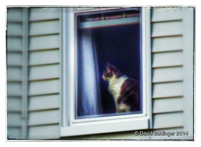Windowcat Kitty Snapseed Walking Around Shot with a Fuji S9400W Edited in Snapseed