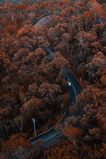 High Angle View Of Road Amidst Autumn Trees