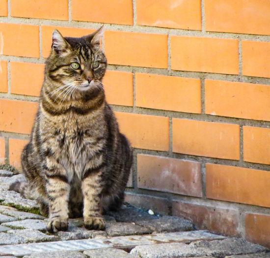 Stadtkater Citycats Catoftheday Cats Cat Katze Kater Animal Eye Yellow Eyes Kitten