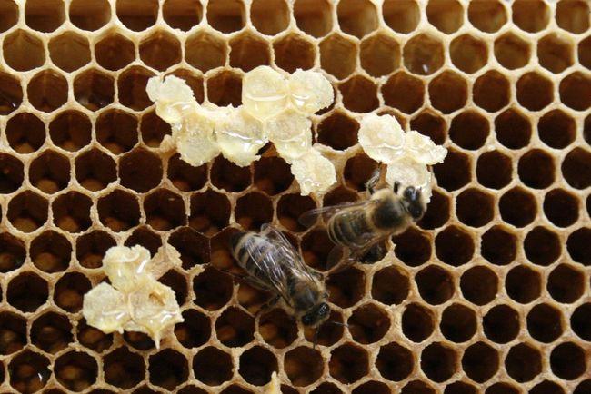 Bienen Bei Der Arbeit Bienenstock Honeycomb Honigbiene Bee Beehive Bienenwabe Honey Honey Bee Honeycomb Honigwaben