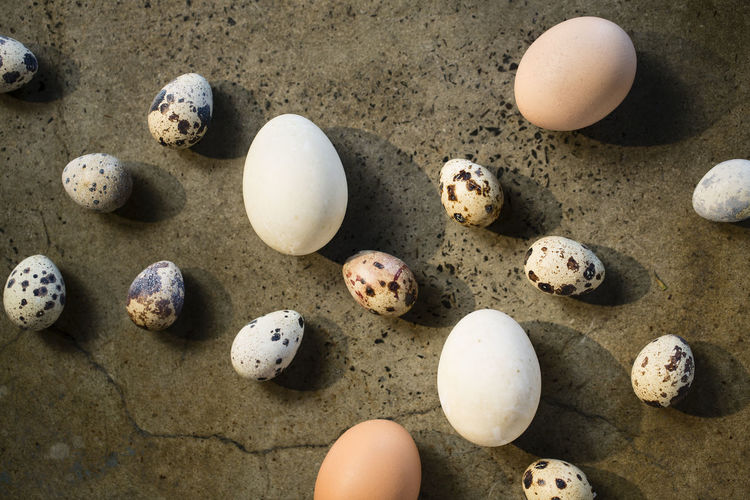 High angle view of eggs on rocks