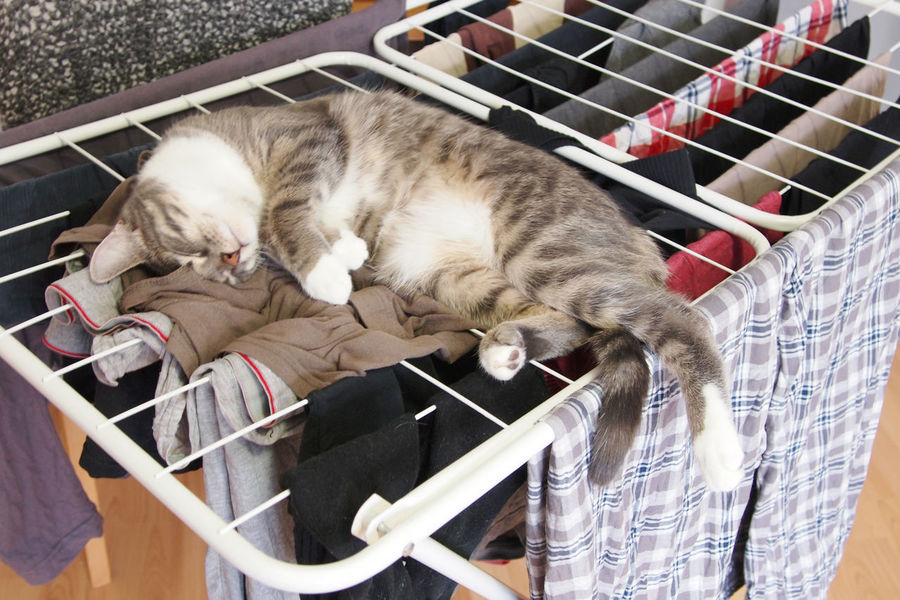 Home Laundry Washing Animal Animal Themes Cat Cats Clothes Clotheshorse Domestic Domestic Animals Domestic Cat Drying Rack Indoors  Lying Down No People One Animal Pet Pets Relaxation Resting Sleeping Tabby