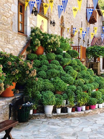 Potted plants in market against building