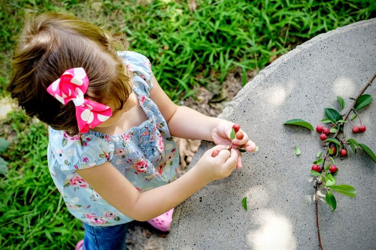High angle view of girl holding berries on field by retaining wall