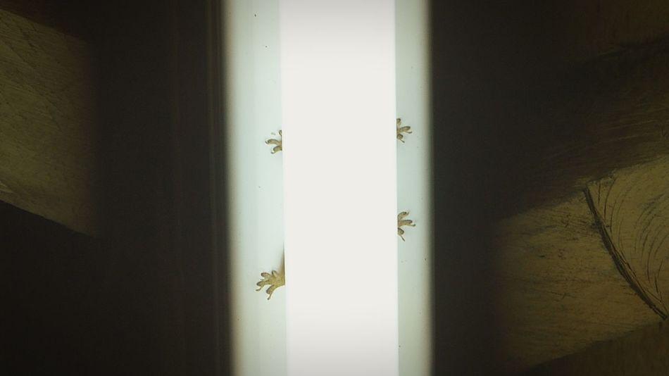 Indoors  No People Day Close-up Light Light And Shadow Gecko Gekko Africa Kenya Hidden