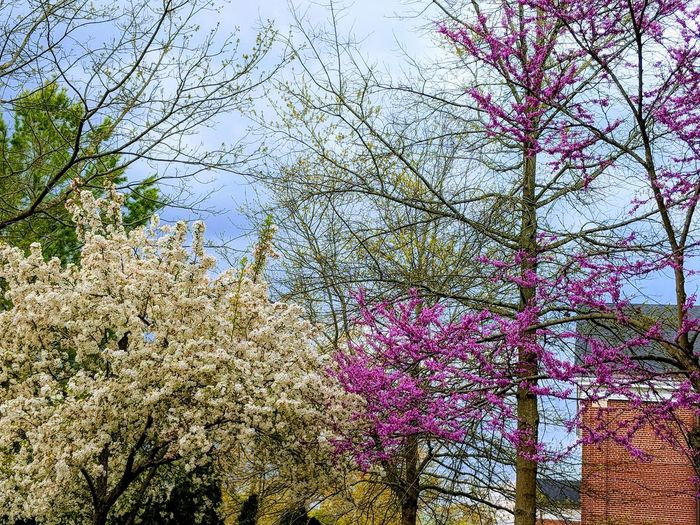 A rainbow of colors against a gray sky. Spring Tree Full Frame Close-up In Bloom Botany Blooming Plant Life Blossom