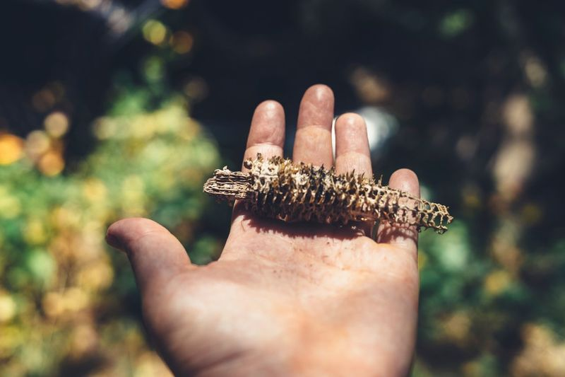 Hand holding found object