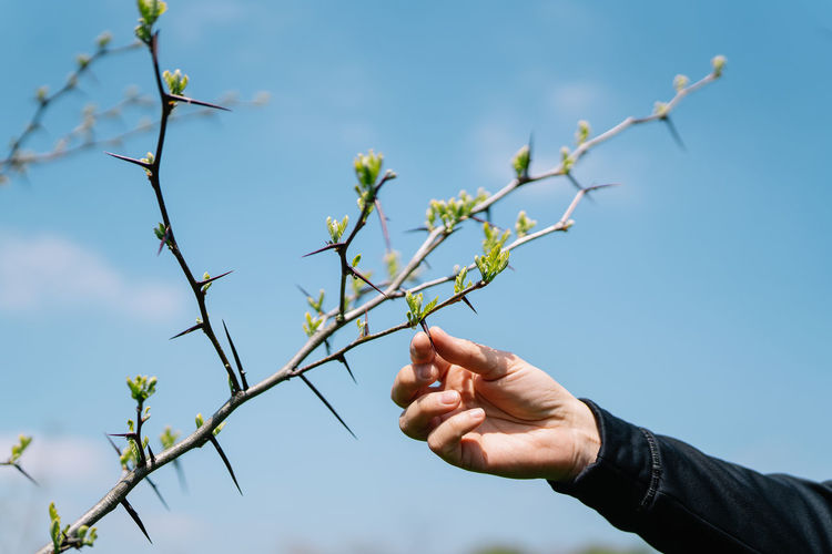 Man holding spiked plant against sky