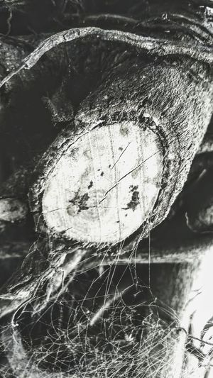 the_wooden_web