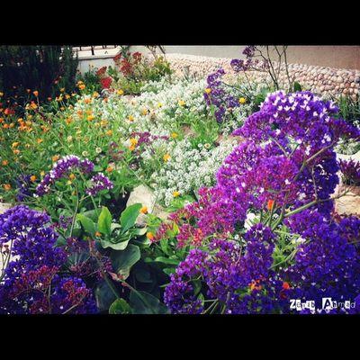 Gaza Palestine Photographer Instgram صورة صورتي صور_من_غزة فلسطين غزة طبيعة تصوير  تصويري