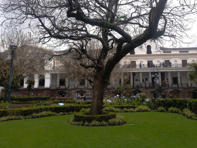 Plaza Grande Adapted To The City City Day Ecuador Green House Nature Plant Quito