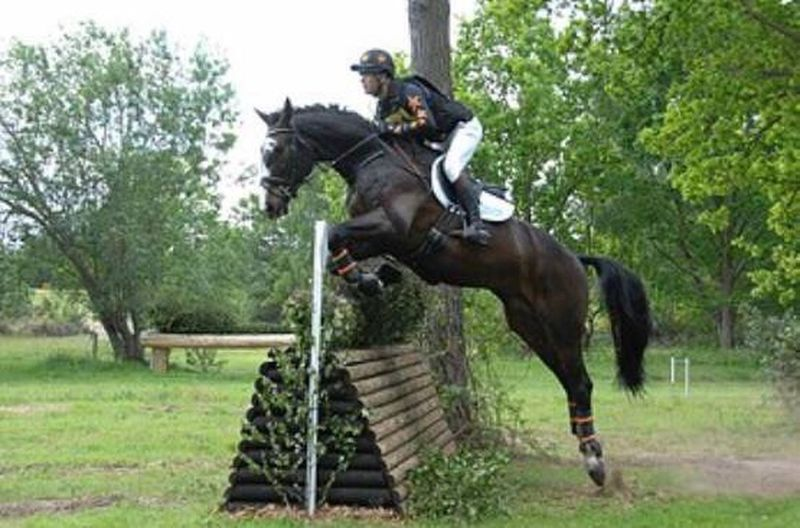 Darnoes popping the cross country Horse Domestic Animals Tree Side View Mammal One Animal Working Animal Britisheventing Equestrian Equestrianeventing Horses Riding Field Bridle Herbivorous Day Outdoors Nature Zoology
