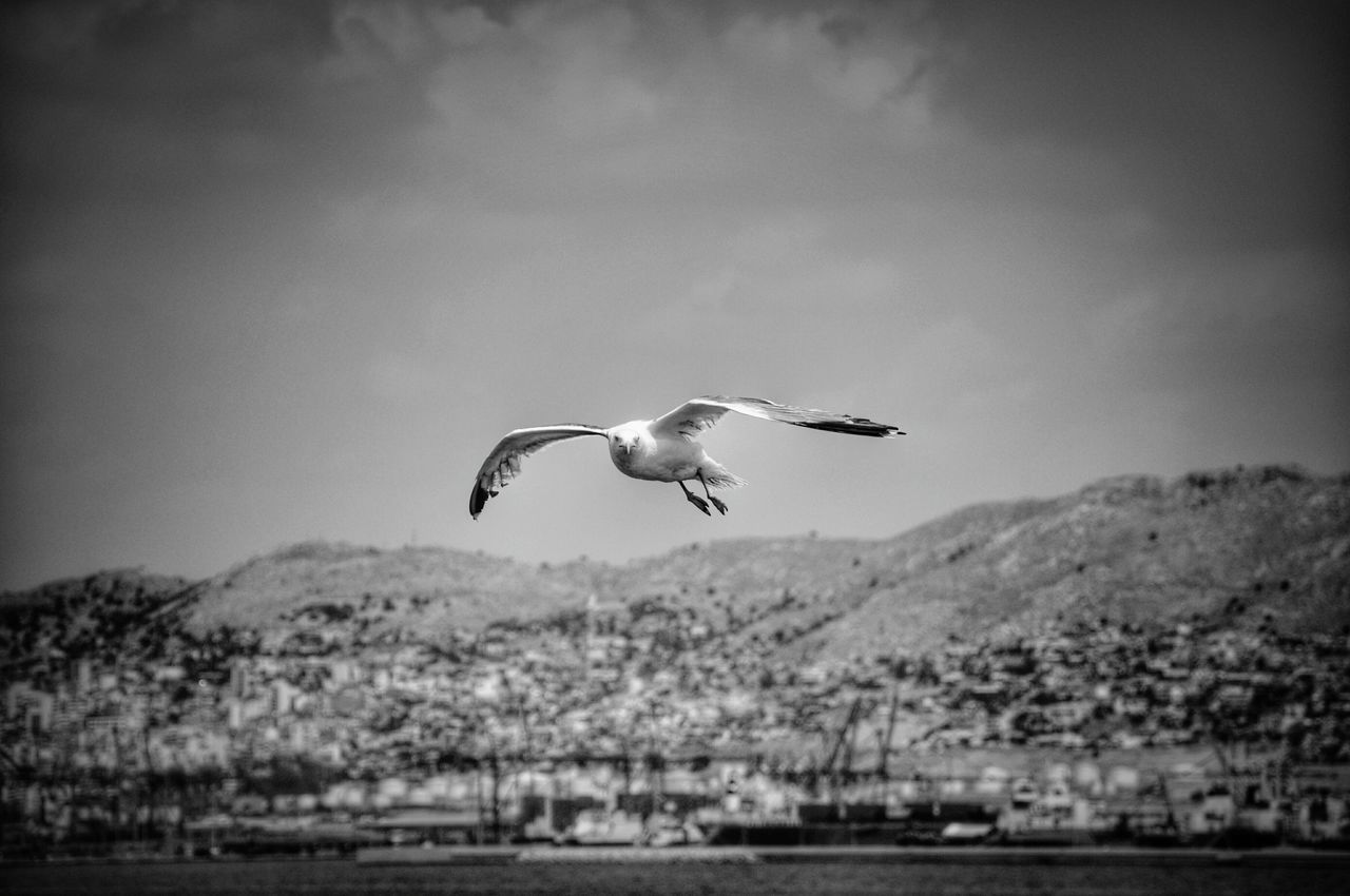 Low Angle View Of Bird Flying Against Mountains And Sky