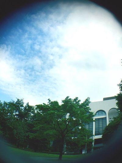 少し青空が見えた。 Relaxing IPhoneography Fisheye Nature_collection Landscape_collection EyeEmNatureLover EyeEm Best Shots - Nature Sky And Clouds Architecture 新緑 青空 空 魚眼レンズ