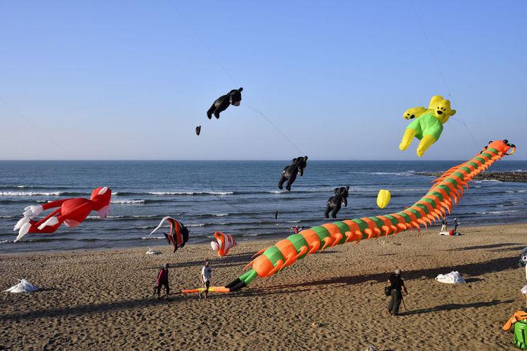 Animal Themes Beach Bird Clear Sky Day Flying Horizon Over Water Nature No People Outdoors Sand Sea Sky Water 北海岸 沙滩 海岸線 熊 玩具 白沙灣 石門 蜈蚣 風箏 風箏公園 飄盪