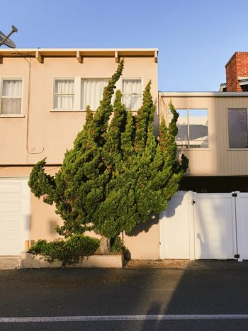 Beautiful funky tree against a pale peach beach house during sunset in Southern California Film Look Quirky Minimal Plant Life Architecture Building Exterior Built Structure Plant Nature Building Growth Day Tree Sunlight No People Window City Sky Outdoors Residential District Shadow Wall