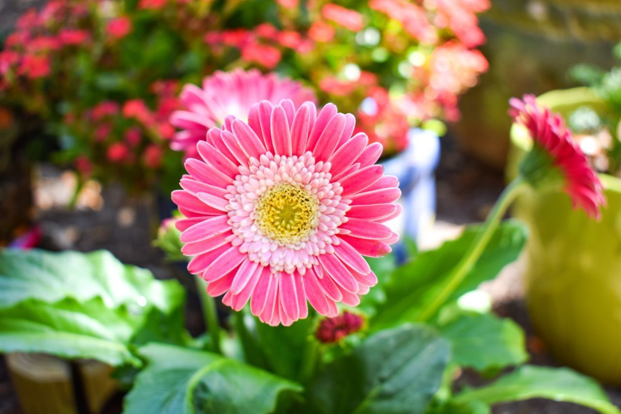 CLOSE-UP OF PINK FLOWER AND PLANTS