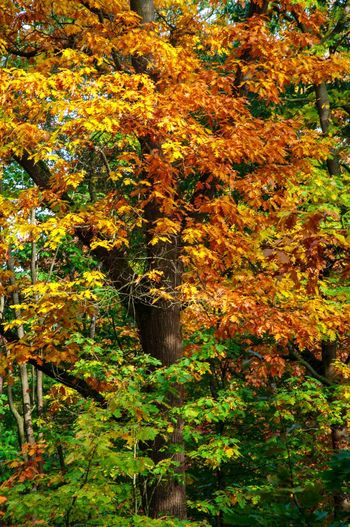 Autumn Autumn Change Nature Tree Beauty In Nature Leaf Forest Scenics Autumn Colors Forest Photography Tranquil Scene Nikon Daylight Light In The Forest Colours Of Nature