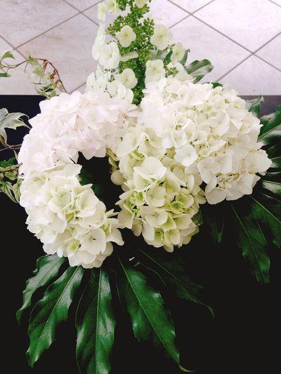 Ortensie at Hotel Caracas - Flowers