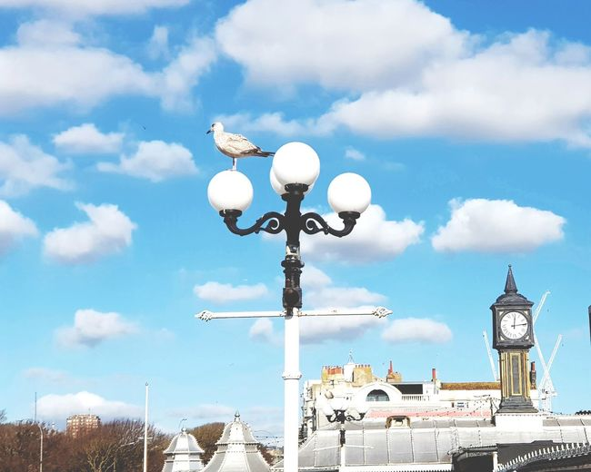 Seagull at the Pier Weather Vane Sky Cloud - Sky