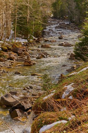 Allgäuer Alpen Bavarian Landscape Beauty In Nature Day Forest Grass Landscape Moss Mountain Stream, Mountain Creek Nature No People Outdoors River Rock - Object Scenics Torrent Tranquil Scene Tranquility Travel Destinations Tree Tree Trunk Water