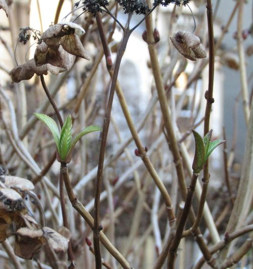 Growth Nature Focus On Foreground Plant Winter No People Nature On Your Doorstep New Shoots🌱 Green Color Close-up Nature