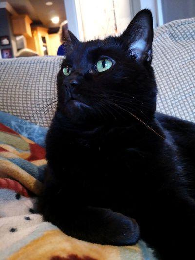 Cat Black Cat