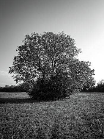 Grüne Lunge... TreePorn Last Days Of The Summer Landscape_photography Black & White Monochrome Walking Around From My Point Of View Fresh 3 Black And White Check This Out Taking Photos